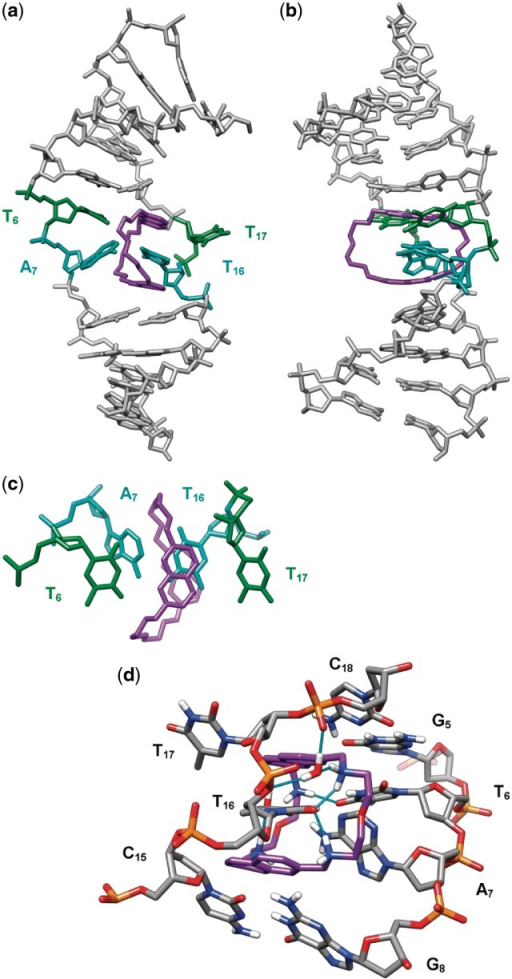 Threading intercalation binding mode of 2,7-BisNP (purple) to TT-DNA from NMR-restrained molecular dynamics calculations, viewed (a) from the major groove and (b) from the side of the flipped-out T17. (c) Top view of the naphthalene rings of 2,7-BisNP stacking with the encapsulated thymine T16. (d) Close-up view of the binding site (view from the minor groove, only heteroatom-bound hydrogen atoms are shown) showing direct and water-mediated hydrogen bonds (cyan sticks) between 2,7-BisNP and TT-DNA.