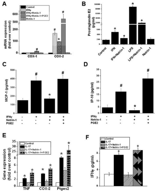 Regulation of COX-2 expression and PGE2 production by netrin-1 in macrophages, neutrophils and T cells. A. IFNγ-induced COX-2 expression was suppressed by addition of netrin-1 in macrophages. Netrin-1-mediated suppression of COX-2 expression was abolished by addition of PGE2. #, p<0.001 vs. all other groups. *p<0.001 vs. IFNγ-treated. B. IFNγ and LPS-induced increase in PGE2 production in macrophages was suppressed with netrin-1 treatment. *, p<0.005 vs. control. +, p<0.001 vs. IFNγ and LPS-treated groups. C and D. IFNγ-induced production of chemokines MCP-1 and IP-10 was inhibited in netrin-1 treated macrophages, which was abolished with PGE2 addition. #, p<0.001 vs. all other groups. *, p<0.001 vs. IFNγ-treated. E and F. IL-17-induced COX-2 expression and inflammatory cytokine production is suppressed by netrin-1 in neutrophils in vitro. E. IL-17 induced the expression of TNFα, COX-2, and prostaglandin E synthase 2 (ptges2) in neutrophils, which was suppressed by addition of netrin-1. Addition of PGE2 along with netrin-1 abolished the suppressive effect of netrin-1. *, p<0.001 vs. all other groups. F. IL-17-induced IFNγ production in neutrophils is suppressed by netrin-1, which was abolished by addition of PGE2. *, p<0.001 vs. all other groups. Values are mean ± SEM. n=4-6.