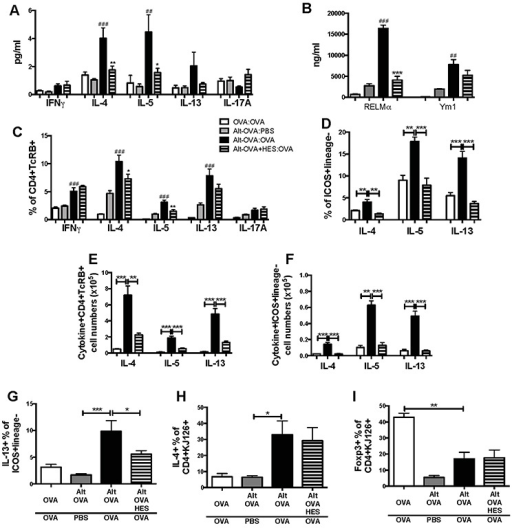 Suppression of innate and adaptive Type 2 responsiveness by HESFollowing Alternaria-OVA sensitization and challenge, BAL fluids, lungs and draining lymph nodes were collected; in some experiments (G-I), 1×106 DO11.10 OVA-specific T cells were transferred to mice prior to sensitization. Fluids were assayed for soluble cytokines and markers, and cells stained for cytokines and Foxp3.A. Cytokines in cell-free BAL supernatant measured by cytometric bead array.B. Type 2 myeloid cell response markers in BAL measured by ELISA.C-F. Intracellular cytokine-positive proportions (C and D) and absolute numbers (E and F) of lung CD4+TCRβ+ T cells (C and E) and ICOS+lineage− Innate Lymphoid Cells (D and F). Lung tissue cells were cultured in PMA/Ionomycin for 4 h in the presence of Brefeldin A, before staining for surface markers and intracellular cytokines.G. Intracellular IL-13 expression by ICOS+Lineage− lung cells.H. Intracellular IL-4 within DO11.10 OVA-specific T cells from the draining lymph nodes co-staining with the clonotypic marker KJ126.I. Intracellular Foxp3 expression in the draining lymph node CD4+KJ126+ T cell population.Results are representative or pooled from at least 2 repeat experiments with 3-5 mice per group. Unless otherwise indicated differences are not significant. *** = p<0.01, ** = p<0.01, * = p<0.05. # indicates significance when comparing Alt-OVA:PBS and Alt-OVA:OVA groups, * indicates significance when comparing Alt-OVA:OVA and Alt-OVA-HES:OVA groups in A-C, or as indicated by bars in D-J.