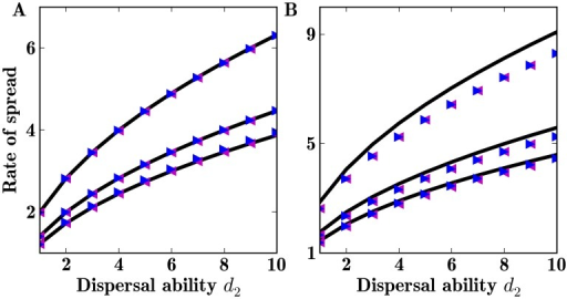 Asymptotic rate of spread of a population with two dispersal abilities.Theoretical (black lines) and computed asymptotic rate of spread when two dispersal abilities are present in the population. Initial propagules are  (blue triangle) and  (magenta triangle). Other parameter values are  (1)  (2)  and (3) . A: Using Gaussian dispersal kernels. B: Using Laplace dispersal kernels.