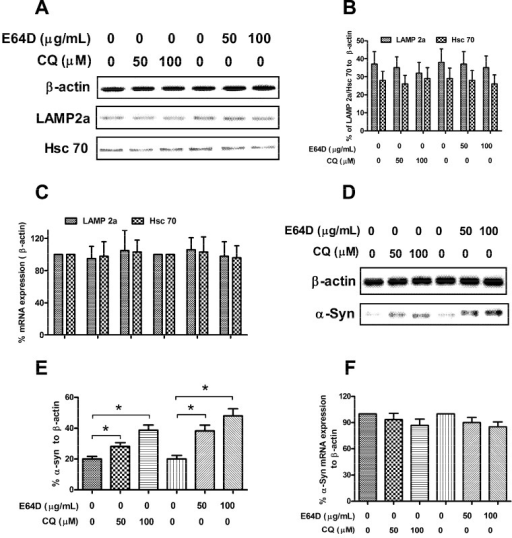 SH-SY5Y-Syn(+) cells are sensitive to the E64D or CQ