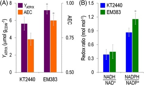 Characterization of the energy and redox status of wild-typeP.putidaKT2440 and the streamlined strain EM383. (A) The ATP content on biomass (YATP/X) and the adenylate energy charge (AEC) were calculated for exponentially-growing cells in shaken-flask cultures using M9 minimal medium containing 0.2% (w/v) glucose. Each bar represents the mean value and SD of the ATP content on biomass (CDW, cell dry weight) or the adenylate energy charge for duplicate measurements from at least three independent experiments. (B) Redox ratios were determined from the absolute intracellular concentrations of NAD+, NADH, NADP+, and NADPH. The pyridine nucleotide cofactors were enzymatically determined in exponentially-growing cells in shaken-flask cultures using M9 minimal medium containing 0.2% (w/v) glucose. Bars represent mean values along with SD of the corresponding parameter for duplicate measurements from at least three independent experiments. The asterisk (*) indicates a significant difference for strain EM383 as compared to wild-type KT2440 according to the Student's t test (P <0.05).