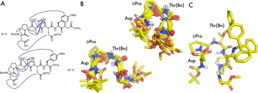 (A) Selected 1H–1H ROESY correlationsfound in 1 at 25 °C and truncated peptide 7 at −20 °C. (B) Two structural ensembles fromthe 20 CNS-generated structures of 1 computed using 25°C ROESY data. (C) One structure chosen from the 20 structuresshown with side chains.