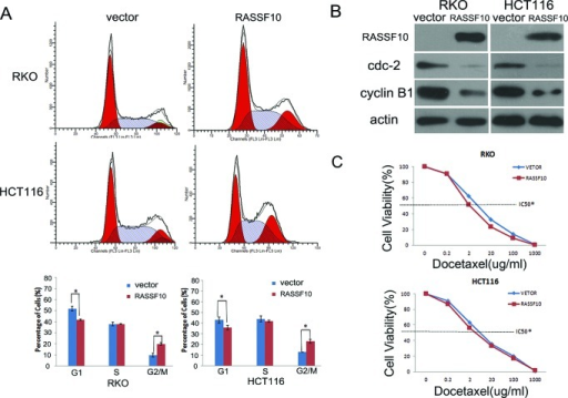 RASSF10 expression alters cell cycle regulations and sensitivity of colorectal cancer cells to docetaxel(A) Cell phase distribution in RASSF10 unexpressed and expressed RKO and HCT116 cells analysed by flow cytometry. *: p < 0.05. (B) The expression of RASSF10, CDC2 and cyclin B1 detected by western blot in RASSF10 unexpressed and expressed RKO and HCT116 cells. Actin: internal control. (C) The cell viability in RASSF10 unexpressed and re-expressed RKO and HCT116 cells after docetaxel treatment. IC50: the half maximal inhibitory concentration Points: three independent experiments. *: P < 0.05.
