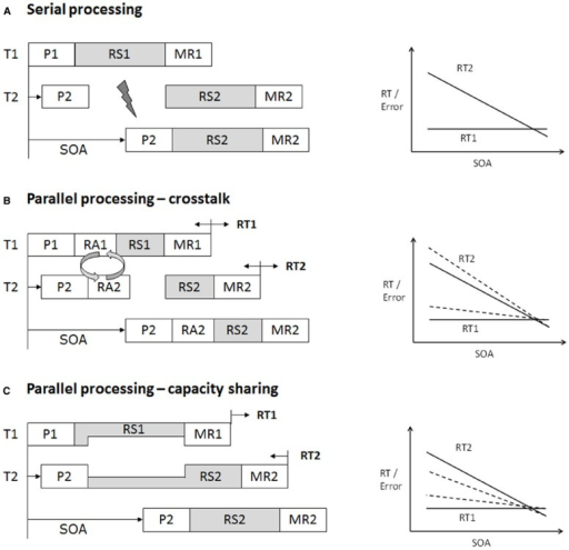 Schematic illustration of serial task processing (A) and different forms of parallel processing (B,C) of two tasks in the framework of an assumed capacity-limited central processing stage. Dashed lines illustrate the changes in result patterns when assuming different forms of parallel processing. Note that although theoretical models are explained in terms of response time (RT) pattern, the same logic also applies to error rates. (A) Illustration of the response-selection bottleneck (RSB) model as explanation for severe dual-task processing limitations (Pashler, 1994). Each task consists of different processing stages (i.e., P, perception; RS, response selection; MR, motor response). Processing in some stages can occur in parallel (in white). Processing of other critical stages cannot occur simultaneously (shaded), because they rely on the same capacity-limited processing channel. When both tasks overlap substantially (e.g., short stimulus onset asynchrony, SOA), Task 2 (T2) processing is interrupted, because RS2 processing has to wait until RS1 processing is completed (psychological refractory period, PRP). At long SOA, no interruption occurs, as critical stages do not overlap. This results in the typical pattern of performance decrements in T2 at short SOA (high dual-task load) compared to long SOA (low dual-task load). Task 1 (T1) processing is only little affected by temporal task overlap. (B) Crosstalk refers to the observation that T2 processing impacts on T1 processing, which has been taken as evidence for parallel processing despite an assumed RSB. Crosstalk effects are typically measured in response latency in T1 (RT1). The impact of T2 processing on central stage processing in T1 can be both beneficial or costly with decreasing or increasing RT1, respectively (e.g., Koch and Prinz, 2002). Importantly, any influence of T2 processing on T1, shortening or prolonging RT1, will back-propagate onto T2 (Ferreira and Pashler, 2002; Miller and Reynolds, 2003; Schubert et al., 2008). Changes in RT1 due to crosstalk should thus also be obtainable in response latency in T2 (RT2). Theoretically, crosstalk effects are not compatible with classical models of a single-channel theory (e.g., RSB model) and favor explanations in terms of capacity sharing (see C). However, assumptions of serial processing according to the RSB model can be preserved when assuming that different sub-components of RS2 can operate in parallel. Some authors thus distinguish response activation (RA) processes from more classical response-selection processes as the basis for interacting central components between two tasks (Hommel, 1998; Lien and Proctor, 2002; Schubert et al., 2008). (C) Capacity models assume that the central bottleneck is not immutable but flexible. The processing limitation arises, because two central processes require access to the same cognitive resources. Available resources are divided between the two tasks for the period during which both central stages overlap. The allocation of resources to the tasks at hand depends on task factors (e.g., instruction, incentives). Extreme forms can mimic a central bottleneck, with 100% resources allocated to T1 and 0% to T2. The more resources are shared between the two tasks (e.g., 70/30 or 50/50), the higher the RT1 increase and RT2 decrease at short SOA. This resource allocation is assumed to be realized by mechanisms of cognitive control (for details, see text).