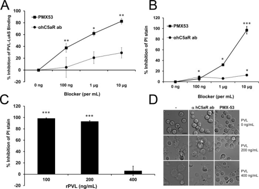 PMX53 inhibits PVL-mediated pore formation and cytotoxicity in vitro.Human PMN were incubated with C5aR blockers (PMX53 or hC5aR antibody) and then exposed to rLukS-PV with or without rLukF-PV. (A) PVL binding to PMN was measured and % binding inhibition vs untreated cells was calculated. rLukS-PV:100 ng/mL. (B-C) PVL-induced pore formation was assayed by PI staining. rPVL:200 ng/mL in B. (D) PVL-induced PMN cytotoxicity in the presence of 10 μg/mL blockers. Representative images are shown. Scale: 10 μm. (n > 3 for A-D). *: p <0.05, **: p <0.01; ***: p < 0.005.