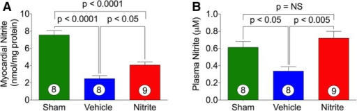 Effects of nitrite therapy on myocardial and circulatory nitrite levels. Heart (A) and plasma (B) nitrite levels in sham and CHF mice. Nitrite (100 mg/L) was given in the drinking water during 4 weeks of reperfusion period. The number inside the bar denotes the number of animals used per experiment. Statistical significance of multiple treatments was determined by 1‐way Bonferroni multiple comparison test. Multiple comparison adjustment was also performed. CHF indicates chronic heart failure; NS, not significant.
