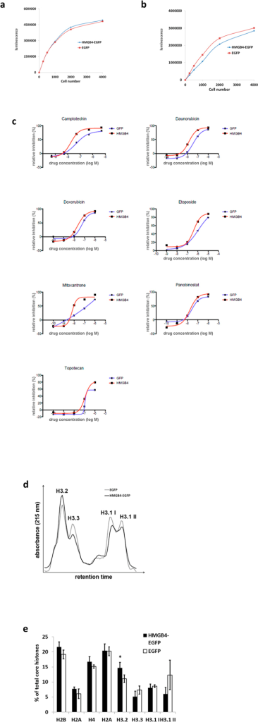HEK 293T -cells overexpressing HMGB4-EGFP have increased sensitivity to topoisomerase inhibitors and altered histone variant composition.(a) Growth of HEK 293T -cell clones with doxycycline induced HMGB4-EGFP or EGFP -expression. The expression of HMGB4-EGFP or EGFP in cells was induced over one week with doxycycline and viability was measured with CellTiterGlo Luminescent assay reagent via ATP quantification. (b) Growth of stable HEK 293T -cell clones, constantly expressing HMGB4-EGFP or EGFP. Cells were cultured for 72 h and viability was measured as described above. (c) Overexpression of HMGB4 increases cell sensitivity to topoisomerase inhibitors. Cells overexpressing HMGB4-EGFP were more sensitive to topoisomerease inhibitors than control cells expressing EGFP. Figure shows representative curves from two different experiments. (d) Quantification of histone H3 variants of HMGB4-EGFP or EGFP-expressing HEK 293T -cell clones. Histones were isolated from the cells and analyzed with RP-HPLC. Histone peaks were identified according to their relative retention times. Histone H3.1 eluted in two peaks (H3.1 I and H3.1 II). Curves are derived from three EGFP -control cell clone analyses and from three HMGB4-EGFP –cell clone analyses. (e) Maximal core histone peak heights of RP-HPLC (see above) were determined with the UNICORN- software. Peak height sum of core histones was determined as 100% and relative peak heights were calculated. The relative amount of histone H3.2 was elevated in the HMGB4-EGFP -expressing cells when compared to the control cells (n = 3, ±SD, *p < 0.05).