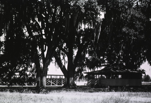 <p>Exterior view: a small building set among majestic live oak trees.</p>