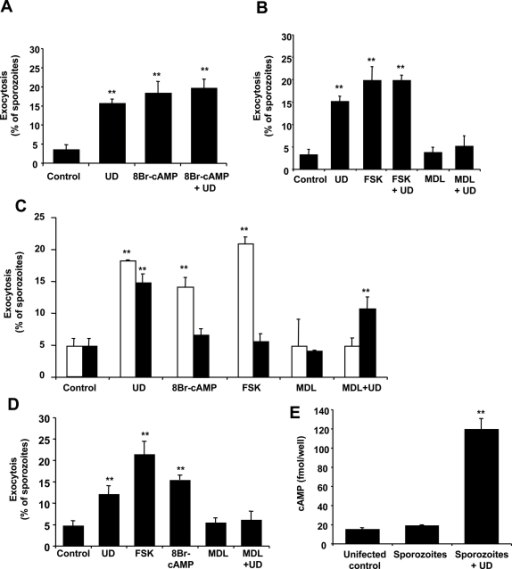 Increases in cytosolic cAMP induce Plasmodium sporozoite exocytosis.(A–B) P. yoelii sporozoites were pre-incubated for 15 min with 8Br-cAMP, forskolin (FSK) or MDL-12.330A to activate or inhibit adenylate cyclase respectively, followed by addition or not of uracil derivatives (UD). Sporozoites were incubated for 1 h before fixation and quantification of exocytosis. (C) P. berghei wt (white bars) or spect 1-deficient (black bars) sporozoites were pre-incubated with the different activators and inhibitors as in (A,B). (D) P. falciparum sporozoites were pre-incubated with the different activators and inhibitors as in (A,B). (E) Intracellular levels of cAMP in P. yoelii sporozoites incubated or not with uracil derivatives for 45 min. Same number of uninfected salivary glands were processed in a similar way and used as a control (uninfected). Results are expressed as mean of triplicates±SD. *, p<0.05; ** p<0.01 when compared to control by ANOVA.