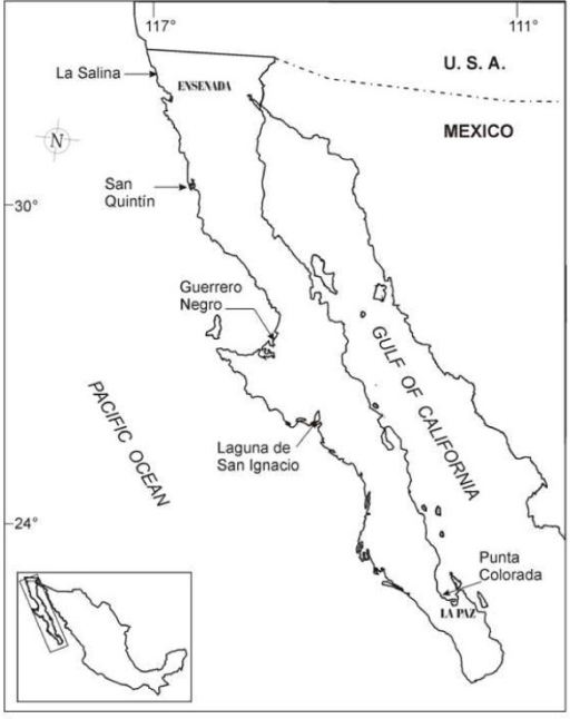 Sampling stations of Dunaliella species indicated by arrows in Baja California, peninsula of México. La Salina and San Quintín samples where used for this work.