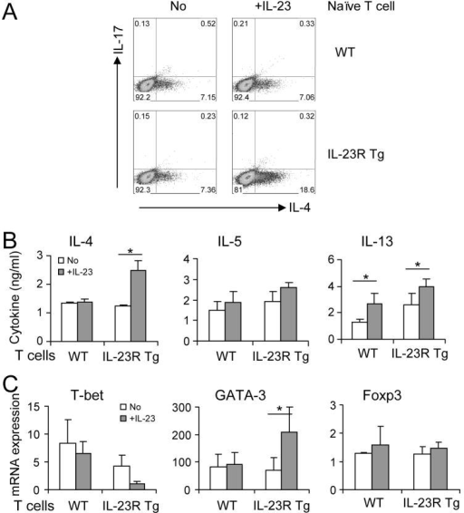 IL-23-IL-23R signaling promotes Th2 differenciation in vitroNaïve T cells were FACS-sorted from IL-23R Tg or B6 mice and stimulated with anti-CD3 and anti-CD28 in the presence of IL-2, IL-4, anti- IFN-γ. (A) 5 days later, IL-4 and IL-17 producing cells were analyzed by intracellular staining. Numbers within the quadrants indicate the percentage of positive cells. (B) Cytokine production was measured by ELISA. (C) T-bet, GATA3 and Foxp3 mRNA expression was analyzed by quatitative realtime RT-PCR. (B–C) The data are expressed as the mean ± SD of triplicate samples. Student t test, *, p < 0.05; p values were calculated from 2–3 independent experiments with consistent results.