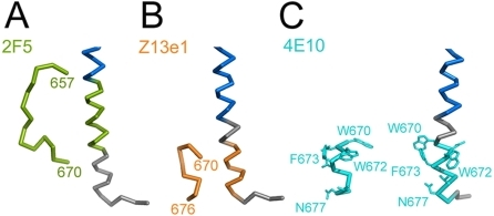 Comparison of MPER conformations.MPER conformations as determined in complex with broadly neutralizing antibodies (A) 2F5 [15], (B) Z13e1 [38] and (C) 4E10 [16] are shown in comparison to MPER within trimeric gp41. The corresponding MPER segments are colored equally and residues contacting the 4E10 Fab are shown as sticks. (blue, HR2).