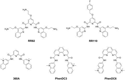 Chemical structures of synthetic molecules that have been demonstrated to exert selective RNA G-quadruplex mediated translation inhibition.