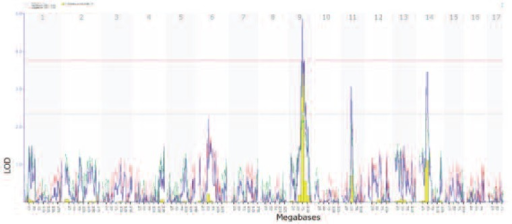 A genetic map of alcohol sedation/activation effects. The horizontal x-axis lists mouse chromosomes, from 1 to the left to chromosome X to the right. The large peak on chromosome 9—a so-called quantitative trait locus (QTL)—is the principal part of the mouse genome that modulates activation levels in females of this BXD family. This sharp peak (high LOD score of 5.0 on the y-axis) can be expanded in GeneNetwork and reveals approximately 160 genes at the peak between 67 and 87 megabases. This set of genes can then be analyzed in GeneWeaver, WebGestalt, COGA, and many other Web resources to evaluate which subsets are most likely to cause differences in response to alcohol, including the suspected alcohol candidate genes, serotonin 1B receptor (5HT1B) and RAB27A. Other features of this genetic map are explained on the Web site.