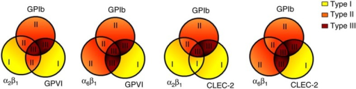 Contribution of platelet-adhesive receptors to formation of type I–III thrombi.Schematic representation of thrombus type formed at high shear rate on surfaces capturing platelets via adhesive receptors (GPIb, and integrins α2β1, α6β1) as well as signalling-linked receptors (GPVI, CLEC-2).