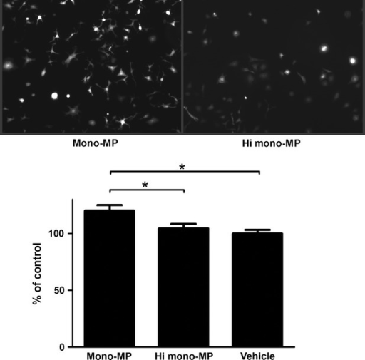 Generation of reactive oxygen species in murine macrophages.To assess the influence of mono-MP on the generation of intracellular oxidative stress in macrophages, C2′,7′-dichlorodihydrofluorescin-diacetate experiments were performed. Murine bone marrow-derived macrophages were stimulated with mono-MP or vehicle for 4 hrs on day 7 of differentiation. Cells pre-treated with mono-MP showed significantly increased intracellular ROS generation compared with control (mono-MP: 120.2 ± 4.9% versus heat inactivated mono-MP: 104.6 ± 3.9%, n = 4, * denotes P < 0.05).