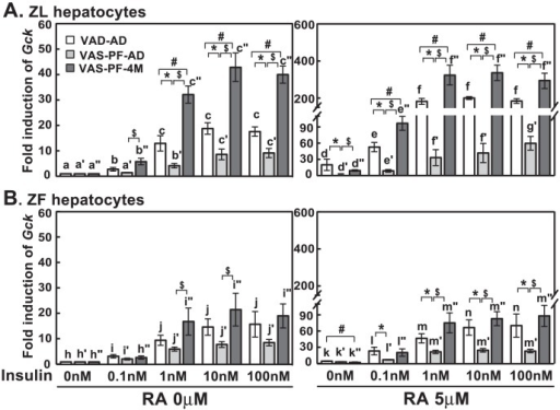 Insulin-induced Gck expression was attenuated in hepatocytes from VAS-PF-AD, but not VAS-PF-4M rats.The primary hepatocytes were treated by insulin (0 nM to 100 nM) with or without RA (5 µM) in medium A for 6 hours. The expression level of Gck was determined by real-time PCR analysis, and the data were expressed as fold induction. The gene transcript levels from the no treatment group (0 nM insulin, no RA) for both ZL and ZF were arbitrarily set to 1. All p<0.05; for (A), a<b<c, a′<b′<c′, a″<b″<c″, d<e<f, d′<f′/g′, e′<g′, d″<e″<f″; for (B), h<i<j, h′<i′, h″<i″<j″, k<l<m, j′<k′<l′, k″<i″<m″, using one way ANOVA. *, #, and $ for comparing the effects of dietary manipulations at any treatment using one way ANOVA.