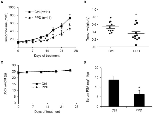 PPD inhibition of the growth of castration-resistant 22Rv1 xenograft tumors.22Rv1 cells were inoculated into castrated nude mice. When the tumors reached ∼100 mm3, the mice were treated with 40 mg/kg PPD through oral gavage 6 days per week (n = 11). A. Mean tumor volumes. B. Individual tumor weight at the conclusion of the experiment. C. Mean mouse body weights. D. Mean serum PSA level determined by ELISA, normalized by tumor weights, at the conclusion of the study. *, P<0.05 from the control group. Error bars, SEM.