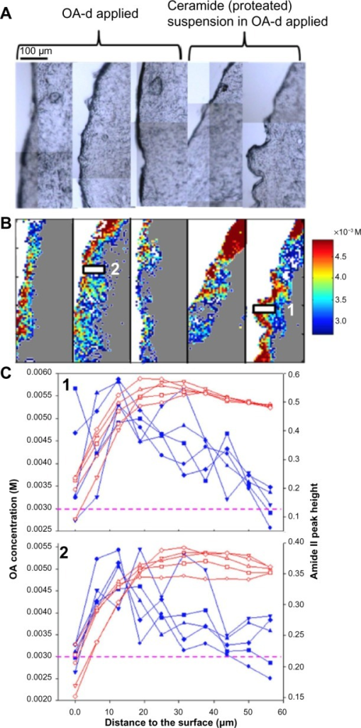(A) Visible micrographs of control skin sections for two different treatments as labeled. (B) Infrared images of acyl chain perdeuterated oleic acid (OA-d) concentration and distribution in skin for the same sections. (C) Line plots of OA-d concentration and Amide II peak height were compared between the two controls as labeled in B (five adjacent lines of pixels).Notes: Blue: OA-d concentration; red: Amide II peak height. Magenta dashed lines indicate the detection limit of 3.0×10−3 M of OA-d. Scale bar is 100 µm.