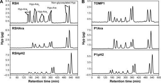 Hyp-Ara profiling of partially deglycosylated EXTs. (A) Top to bottom: RSH, RSHAra, and RSHpH2; (B) top to bottom: TOMP1, P1Ara, and P1pH2. Each Hyp-arabinosides were present in two peaks due to two configurations of Hyp (cis or trans) generated during base hydrolysis.50 The Hyp-Ara4 peaks disappeared after α-arabinofuranosidase treatment, while some Hyp-Ara4 glycans were still present after pH 2.0 HCl deglycosylation. See Table 2 for Hyp-oligoarabinan content quantification in each sample.