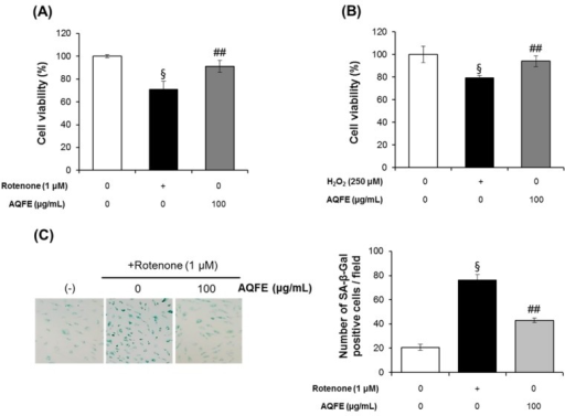 Effect of AQFE treatment on viability against premature senescence induced by oxidative stress to HDFs. AQFE inhibited (A) rotenone or (B) H2O2-induced cytotoxicity measured with MTT assays. (C) SA-β-gal staining of human dermal fibroblast cells after exposure to rotenone on untreated control, cells treated with rotenone and cells treated with rotenone + AQFE 100 µg/mL. The number of SA-β-gal positive cells per field was calculated using Image J software. Data are mean ± standard deviation. §p < 0.01 compared with the vehicle-treated group; ##p < 0.01 compared with the rotenone or H2O2-treated group (n = 3). (D) SA-β-gal staining of human dermal fibroblast cells after exposure to advanced glycation end products on untreated batch, treated with BSA, treated with AGE-BSA, treated with AGE-BSA + AQFE 20 µg/mL, treated with AGE-BSA + AQFE 50 µg/mL and treated with AGE-BSA + AQFE 100 µg/mL. Data are mean ± standard deviation. §p < 0.01 compared with the vehicle-treated group; #p < 0.05 compared with the MG-treated group (n = 3). The results were confirmed by eight independent experiments.