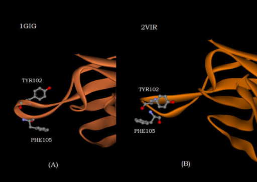 The orientation of the heavy chain residues TYR102 and PHE105 in the uncomplexed structure (1GIG) (figure 3A) and in the complexed structure (2VIR) (figure (3B), respectively, with respect to the bulk of the heavy chain (off and to the right of the figure).
