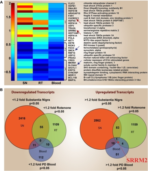 heat map and venn diagrams of differentially expressed genes overlapping in multiple pd studiesa