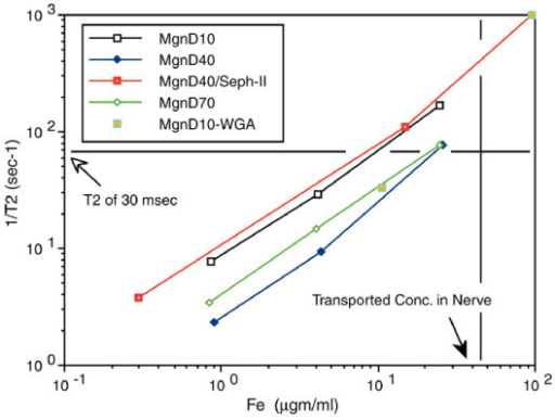"T2 relaxivity of hydroxide free magnetite preparations. T2 relaxivity curves for polyacrylamide ""tissue"" gels polymerized with uniform distributions of various dextran coated magnetite particle preparations. Relaxivity is compared with the concentration of particles in the each gel preparation as assessed by ferrozine assay of iron content after the imaging. 1/T2 was measured in a 4.7Tesla Sisco MR spectrometer. At concentrations comparable to what was achieved in nerve by axonal transport, a T2 below 30 milliseconds would be expected for any of these particle preparations. D10 = 10,000 MW dextran coating, D40 - 40,000 MW, D70 - 70,000 MW, Mgn = magnetite, WGA is wheat germ agglutinin, Seph II - sepharose separated to reduce contamination of magnetite by non-superparamagnetic ferrites."