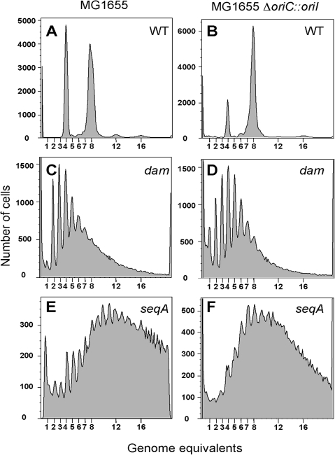 Flow cytometric analysis of DNA content in E. coli.The cells used were MG1655 (A) and MG1655ΔoriC::oriI (B), and their dam and seqA mutant derivatives (C, E) and (D, F), respectively. Cells were analyzed after replication-run out in the presence of drugs that inhibit replication initiation and cell division. 100,000 cells were analyzed in each experiment.