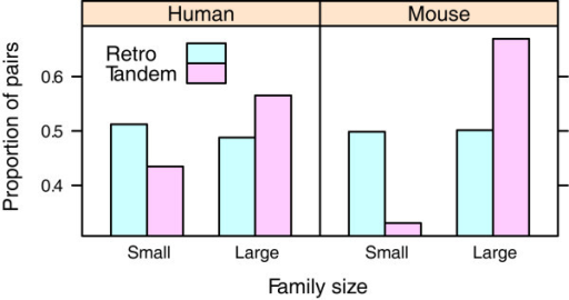 Gene duplicability. Distribution of the duplicates among small (≤5 members) and large (>5 members) families; tandem duplicates are more likely to be enriched in large families than the retrogenes (p < 0.01 for both genomes, chi-square test)
