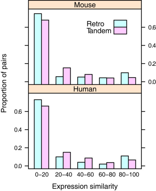 Percentage of tissues with duplicates co-expressed. Medians for tandem duplicates and retrogenes in mouse genomes are 8.5 and 1.8, respectively (p = 0.002, one-tailed rank sum test); medians for the both of duplicates in human genomes are 7.9 and 2.0, respectively (p = 0.036)