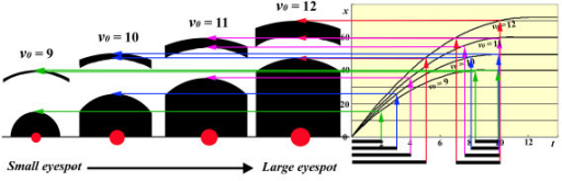 Simulation of eyespots with various levels of organising centre activity. Signals propagate according to the t-x curves depicted on the right side of the figure. By definition, the signalling process starts at t = 0 for all four eyespots shown in this figure. However, smaller eyespots were assumed to be associated with a lower v0 and shorter signal duration D. The signalling dynamics shown in Figure 6 are not shown here, but the single time point t = 10 is depicted as a snapshot. Signal durations are indicated by horizontal bars under the t axis. The front and rear of the signal for the same eyespot are depicted by arrows of the same colour. Organising centres are shown as red spots; the sizes of the spots reflect their signalling activities. Only half of an eyespot is drawn, with both the right and left sides deleted for simplicity. Note the differences in size and morphology among these four eyespots.