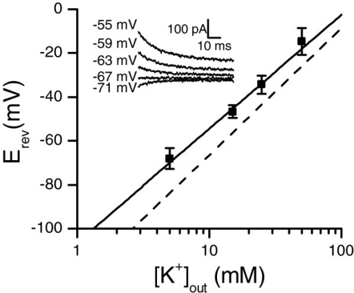 Reversal potential of the sustained current followed the Nernst slope for potassium. The reversal potential was measured from tail currents with varying external K+ concentrations (inset), resulting in Erev = -68 mV under the standard 5 mM concentration (n = 17 (5 mM), 6 (15 and 50 mM) or 5 (25 mM), data are mean ± SD). The fitted Nernst slope (solid line) was 52 mV/mM and the theoretical Nernst slope (dashed line) for potassium was 58 mV/mM. Theoretical Erev with 5 mM [K+]out was -84 mV.