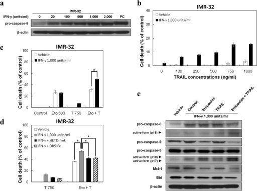 Re-expression of caspase 8 sensitizes IMR-32 cells to TRAIL cytotoxicity(a) Expression of caspase 8 in IMR-32 cells after treatment with the indicated concentrations of IFNγ for 48 h. Caspase 8 expression in SK-N-MC cells was used as a positive control (PC). Equal loading was assessed by staining with anti-β-actin. (b–d) Cells were cultured in 100 mm plates and exposed to 1000 units/ml IFNγ. After a 24 h incubation, cells were replated in 96 well plates, cultured for 24 h, and treated with etoposide (Eto; 500 ng/ml) and/or TRAIL (T; 100, 250, 500, 750, or 1000 ng/ml) in the absence or presence of 10 μM zIETD-fmk or 50 ng/ml DR5:Fc. The results are presented as cell death percentage against vehicle-treated control (means±S.D. from three independent experiments). Statistically significant differences are specified by asterisks (*P<0.05). (e) IMR-32 cells were exposed to 1000 units/ml IFNγ for 48 h, followed by consecutive treatment with etoposide (500 ng/ml) and/or TRAIL (750 ng/ml) for 12 h. Total cell lysates were used to detect the expression and cleavage of caspases 8, 9, 3, Mcl-1 and Bid. Equal loading was assessed by staining with anti-β-actin.