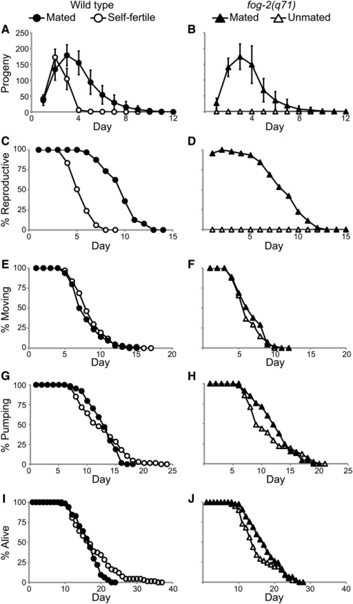 Increased progeny production in mated animals did not accelerate somatic aging. (A, B) Live progeny production, (C, D) reproductive span, (E, F) coordinated body movement span, (G, H) pharyngeal pumping span, and (I, J) life span were quantified for mated and self-fertile WT hermaphrodites and mated and unmated fog-2(q71) females analyzed using a longitudinal study design. The data in (A), (B), (I), and (J) were reported in Pickett and Kornfeld (2013).
