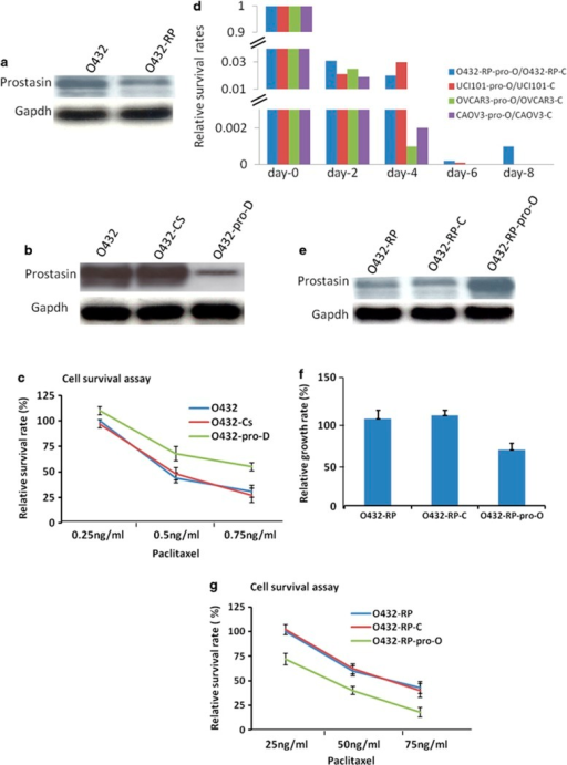 Prostasin has important roles in chemoresistance and cell death in cell culture model. (a) Prostasin decreased in paclitaxel-resistance cancer cell line. O432: ovarian cancer cell line Ovca432 (sensitive to paclitaxel); O432-RP: paclitaxel resistance cell line generated from Ovca432. The prostasin protein levels in O432 and O432-RP cells are shown in immunoblots with specific antibodies. (b) Prostasin siRNAs transfection reduced prostasin. O432-pro-D cells (transfected with prostasin siRNA) express lower prostasin, compared with control cells of O432 (transfected with reagent only) and O432-Cs (transfected with no-targeting siRNA). The prostasin protein levels are shown in immunoblots with specific antibodies. (c) Downregulation of prostasin in O432 cells resulted in increase of chemoresistant activity. Cells were treated with paclitaxel at different concentrations for 24 h (starting 48 h after siRNAs transfection) and cultured with normal medium for an additional 7 to 10 days before cell survival was assayed. Relative cell survival rates of each cell line are shown. (d) Overexpression of prostasin greatly induces cell death in ovarian cancer cells. The cell survival rates are shown after forced overexpression of prostasin in several cell lines from day-0 to day-8, respectively. (e) Prostasin cDNA transfection resulted in overexpression of prostasin in chemoresistant O432-RP cells. O432-RP-pro-O cells (transfected with prostasin cDNA) express higher prostasin compared with control cells O432-RP and O432-RP-C (transfected with control vector). The prostasin protein levels are shown in immunoblots with specific antibodies. (f) Forced overexpression of prostasin represses growth of chemoresistant cells. Relative cell growth rates are shown for O432-RP-pro-O and control cells O432-RP and O432-RP-C. (g) Forced overexpression of prostasin in O432-RP cells re-sensitizes chemoresistant cells. Cells were plated at about 10–20% confluence and treated with paclitaxel at different concentrations for 24 h, cultured with normal medium for additional 7 to 10 days, then assayed for cell survival. Relative survival rates of cell lines are shown