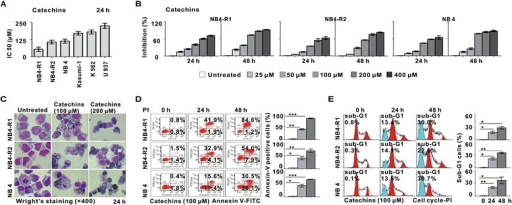 The effect of Catechins treatment on growth and apoptosis of human leukemia cell lines. (A) IC50 results obtained from MTT assay in leukemia cell lines treated with Catechins at 24 h. The IC50 values of NB4-R1, NB4-R2 and NB4 cells were below 125 μM. (B) The growth inhibition of NB4-R1, NB4-R2 and NB4 cells treated with Catechins for 24 and 48 h. Reduced cell viability were detected in APL cell lines from 50 μM Catechins. (C) Characteristic apoptotic cells were present in NB4-R1, NB4-R2 and NB4 cells treated with 100 μM or 200 μM Catechins for 24 h. (D) Detection of apoptotic cells by Annexin V-FITC/PI double staining in NB4-R1, NB4-R2 and NB4 cells treated with 100 μM Catechins for 24 and 48 h. Catechins treatment increased the percentages of Annexin-V+/PI- cells (lower right quadrant) and Annexin-V+/PI + cells (upper right quadrant). (E) Contribution of nuclear DNA content in NB4-R1, NB4-R2 and NB4 cells treated with 100 μM Catechins for 24 h and 48 h. Significantly increased sub-G1 cells were observed. *P < 0.05, **P < 0.01, ***P < 0.001 comparing with the untreated cells.