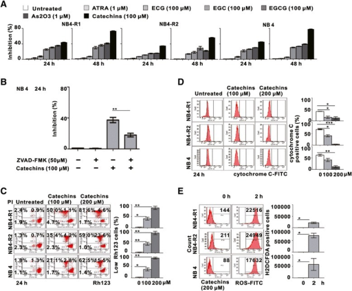 Catechins induced mitochondrial trans-membrane potential collapse, cytochrome C loss and ROS production in NB4 cells. (A) The inhibitory effect of NB4-R1, NB4-R2 and NB4 cells in response to ATRA (1 μM), As2O3 (1 μM), EGCG (100 μM), ECG (100 μM), EGC (100 μM) and Catechins (100 μM) treatment for 24 and 48 h. (B) Growth inhibition of NB4 cells was significantly abrogated by pan-caspase inhibitor ZVAD-FMK (50 μM). **P < 0.01 comparing with the Catechins group. (C) The mitochrondrial trans-membrane potential was decreased in NB4-R1, NB4-R2 and NB4 cells treated with 100 μM and 200 μM Catechins for 24 h. The numbers below the scatter plots represented the percentage of Rh123 low cells. (D) The mitochondrial cytochrome c was accordingly decreased in NB4-R1, NB4-R2 and NB4 cells treated with 100 μM and 200 μM Catechins for 24 h. (E) ROS generation by Catechins in NB4-R1, NB4-R2 and NB4 cells. DCF-derived fluorescence in untreated and in those treated for 2 h with 200 μM Catechins was shown. *P < 0.05, **P < 0.01, ***P < 0.001 comparing with the untreated cells.