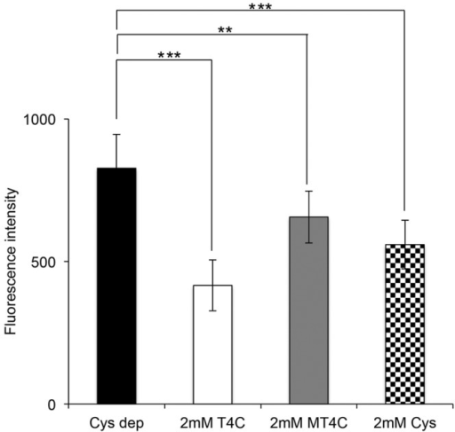 Influence of T4C, MT4C, and l-cysteine on the intracellular ROS levels. Trophozoites were cultivated in l-cysteine-deprived BI-S-33 medium for 72 h, and after that, the medium was replaced with l-cysteine-deprived BI-S-33 media containing 2 mM T4C, MT4C, or l-cysteine. After 3 h, approximately 4.0 × 105 cells were then incubated with the dye 2′,7′-DCF-DA for 20 min. The intracellular ROS levels were quantified by determination of DCF fluorescence. Results were normalized with cell numbers and are presented relative to levels in untreated control cells. The means ± SD from three independent experiments performed in triplicate are shown. Statistical comparisons were made by Student's t test (**, P < 0.01; ***, P < 0.001).
