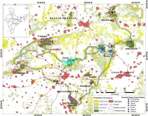 Study area map showing sampled sites, genotype locations and habitat connectivity.The study area of Central India spanning the states of Madhya Pradesh, Maharashtra and Chhattisgarh, showing tiger habitat (forest cover) coded with tiger occupancy probability, protected areas, human habitation (night lights), major roads and least-cost habitat corridors connecting tiger reserves. Individually genotyped tigers (n = 165) are shown as color coded dots at their sampled locations with their colors matching their genetically assigned population.
