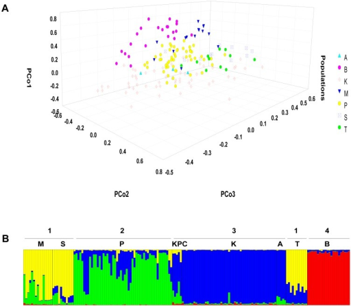Results of individual clustering analyses.(A) Three dimensional plot showing partitioning between different populations as obtained from PCo analysis based on PhiPT co-dominant genetic distance among individuals. (B) Summary barplot of STRUCTURE run at K = 4 showing population assignments for each individual. Four distinct population clusters are observed. Sampled populations are Melghat (M), Satpura (S), Pench (P), Kanha-Pench corridor (KPC), Kanha (K), Achanakmar (A), Tadoba (T) and Bandhavgarh (B).