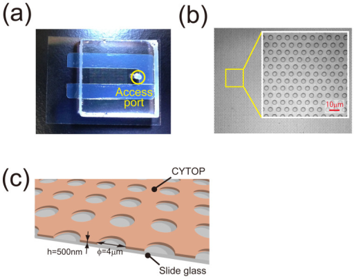 Micro-chamber arrays for asymmetric lipid bilayer formation.(a) Fabricated micro-device where the substrate of hydrophilic-in-hydrophobic structures is assembled with cover glass that has an access port for sample injection. (b) Bright field image of the through-hole structures of the carbon-fluorine hydrophobic polymer on a hydrophilic glass substrate. (c) Illustration of a fabricated structure (diameter, 4 μm; thickness, 500 nm).
