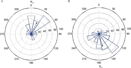 Angular histograms of roosting locations in the natural geomagnetic field (A) and a polarity reversed magnetic field (B).Field intensity is 51μT. Black arrows indicate the direction and magnitude of the mean resultant vector. Nm: magnetic north.