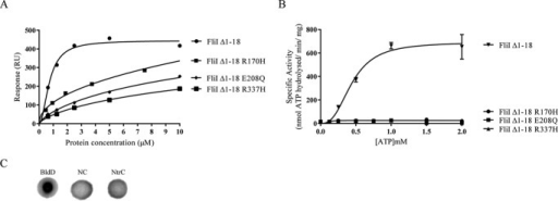 A, affinity fit for cdG binding to different FliI alleles (FliIΔ1–18, FliIΔ1–18 R170H, FliIΔ1–18 E208Q, and FliIΔ1–18 R337H). B, ATPase activity for different FliI alleles. Protein specific activity in each case (nmol ATP hydrolyzed/min/mg protein) is shown for increasing ATP concentrations. C, DRaCALA binding assay for [32P]cdG to 10 μm NtrC (A. vinelandii). Positive (10 μm BldD*) and negative binding controls (NC) were included as appropriate.