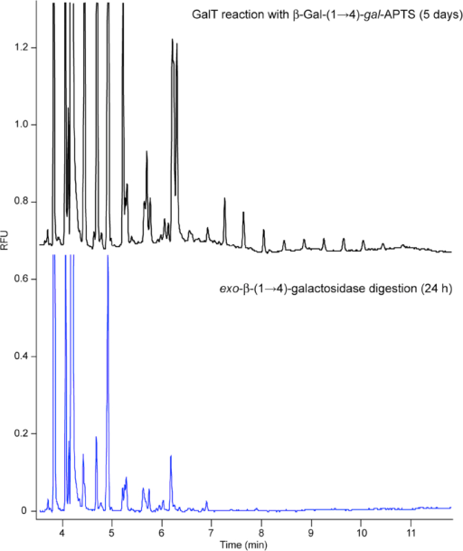 Digestion of the GalT reaction products with exo-β-(1 → 4)-galactosidase. Black trace: CE-LIF electropherogram of the products of galactan elongation after incubation of Gal-β-(1 → 4)-gal-APTS with GalT and UDP-Gal. Blue trace: CE-LIF analysis of the digestion of elongation products with exo-β-(1 → 4)-galactosidase. The galactosyltransferase reaction was performed for 5 days at 20 °C with 100 μg of microsomal protein in 1.25% Triton X-100 (detergent/protein ratio 5:1), 25 mM Mes-KOH buffer pH 6.5 with 15 mM MnCl2, 100 μM Gal-gal-APTS, 2.5% glycerol and 0.5 mM UDP-Gal. Enzymatic digestion was performed with 2 μU of exo-β-(1 → 4)-galactosidase (Streptococcus pneumoniae) for 24 h.