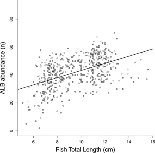 ALCB abundance versus individual length.Relationship between the abundance of Acellular Lamellar Cephalic Bodies and the total length (cm) of Stellifer rastrifer individuals, sampled from August 2003 through October 2004 in Caraguatatuba Bay, southeastern Brazil.