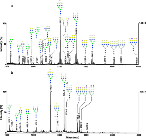 MALDI-MS analysis of N-glycans from a representative serum sample of grass carp (Grass-1).(a) MS spectrum of permethylated N-glycans; (b) MS spectrum of methylamidated N-glycans.