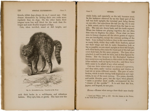 <p>Image of facing pages (p. 128-129) from The expression of the emotions in man and animals / by Charles Darwin. London : John Murray, 1872. Page 128 has illustration of a cat terrified by a dog. From life by Mr. Wood. The cat is shown with its back arched and teeth bared. Page 129 is text.</p>