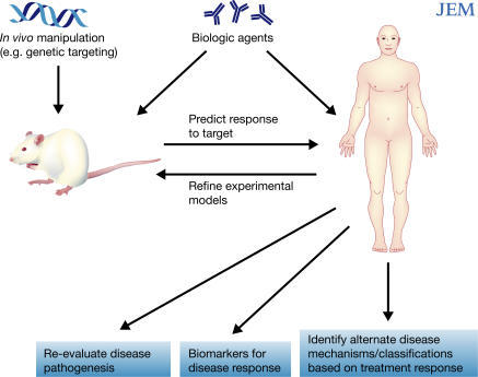 mechanisms of autoimmunity in animal models and humans While none of the animal models mimics the full spectrum of the human disease,  each  suggests that similar mechanisms might operate in the human disease.